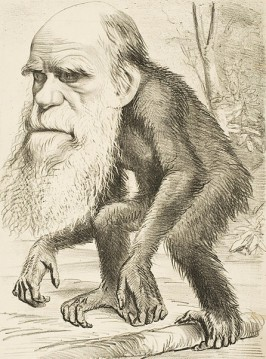 As evolution became widely accepted in the 1870s, caricatures of Charles Darwin with an ape or monkey body symbolised evolution/Wikipedia