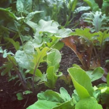 SPO_103113_garden