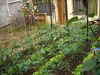Urban farming near an apartment complex/Wikipedia