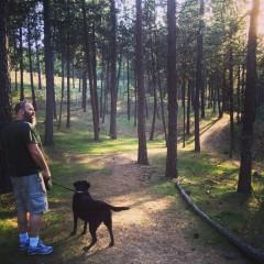 blauer_forest