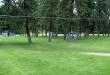 Linwood Park/Spokane County Photo