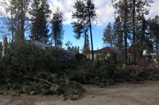 Storm damage from Spokane windstorm 2015/Tracy Simmons - SpokaneFAVS